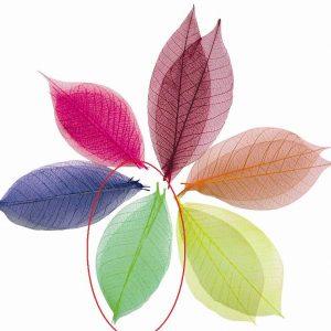 20 feuilles vertes en papier
